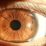 eye photo firefly